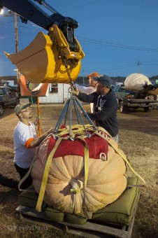 Giant pumpkin weigh-off competition